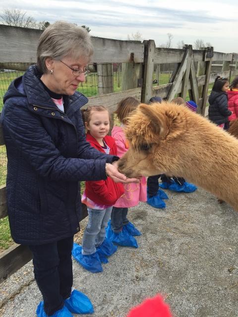 Alpaca Farm (10) (480x640)