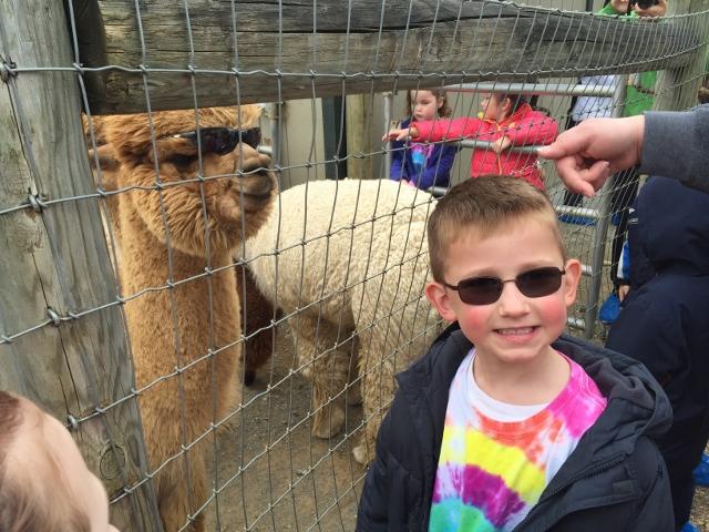 Alpaca Farm (16) (640x480)